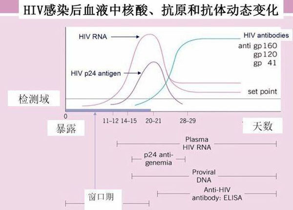 抗体产生曲线