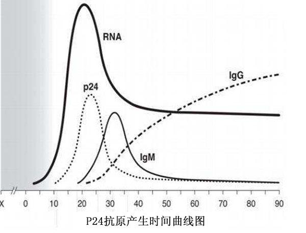 P24抗原产生时间