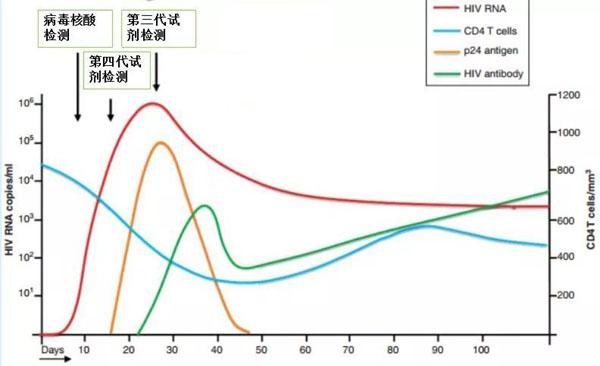 抗原抗体产生时间图.jpeg