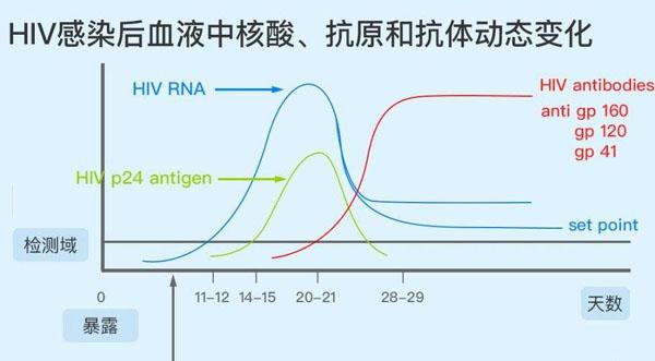 抗原抗体与检测时间.jpg